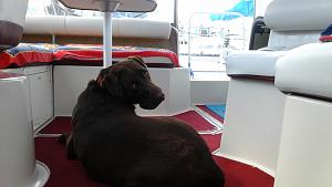 Charlie on the boat - Aug. 25, 2015.jpg